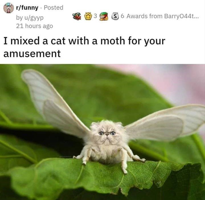 reddit post photoshop edit i mixed a cat with a moth for your amusement. a fluffy white moth with a cat head sitting on a green leaf with its wings spread