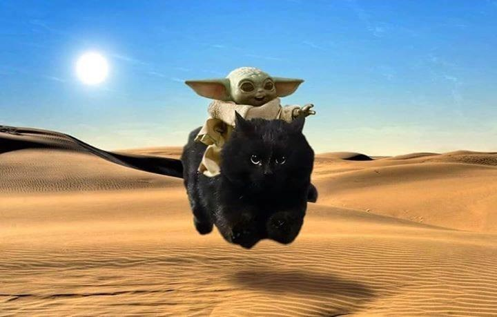 photoshop edit of baby yoda from the mandalorian riding a big majestic black cat in a desert