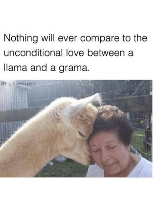 Nose - Nothing will ever compare to the unconditional love between a llama and a grama. @hightiveexpert