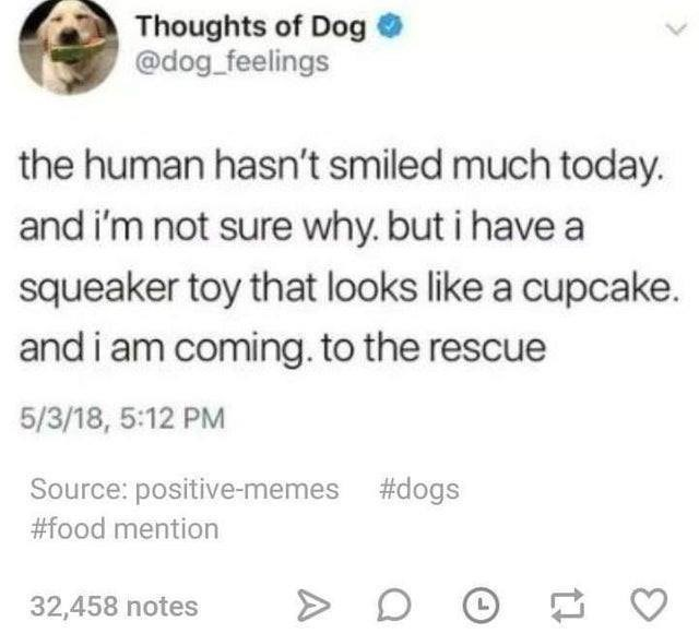 Text - Thoughts of Dog @dog_feelings the human hasn't smiled much today. and i'm not sure why. but i have a squeaker toy that looks like a cupcake. and i am coming. to the rescue 5/3/18, 5:12 PM Source: positive-memes #dogs #food mention 32,458 notes