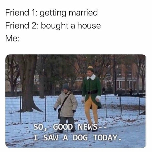 Adaptation - Friend 1: getting married Friend 2: bought a house Me: SO, GOOD NEWS I SAW A DOG TODAY.