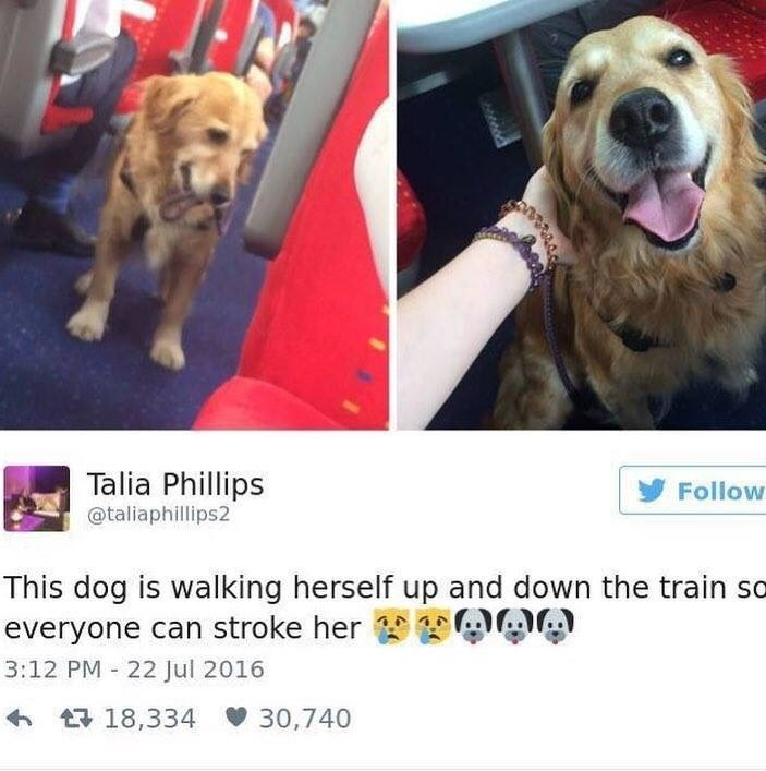 Dog - Talia Phillips y Follow @taliaphillips2 This dog is walking herself up and down the train so ADA everyone can stroke her 3:12 PM 22 Jul 2016 6 17 18,334 30,740