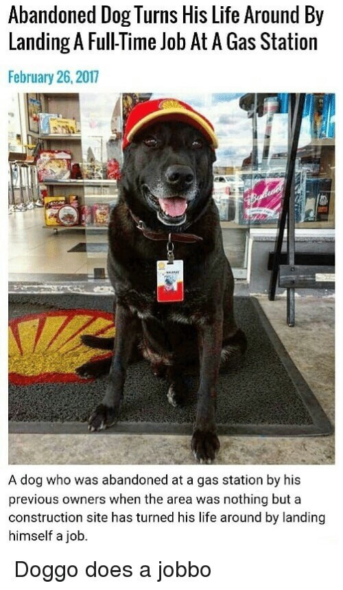 Dog - Abandoned Dog Turns His Life Around By Landing A Full-Time Job At A Gas Station February 26, 2017 A dog who was abandoned at a gas station by his previous owners when the area was nothing but a construction site has turned his life around by landing himself a job. Doggo does a jobbo
