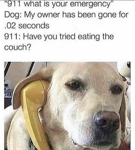 "Vertebrate - ""911 what is your emergency"" Dog: My owner has been gone for .02 seconds 911: Have you tried eating the couch? Thfynroer"