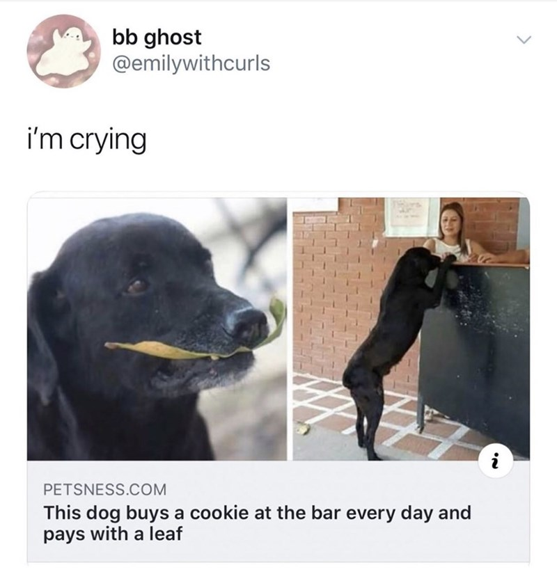 Dog breed - bb ghost @emilywithcurls i'm crying PETSNESS.COM This dog buys a cookie at the bar every day and pays with a leaf NN