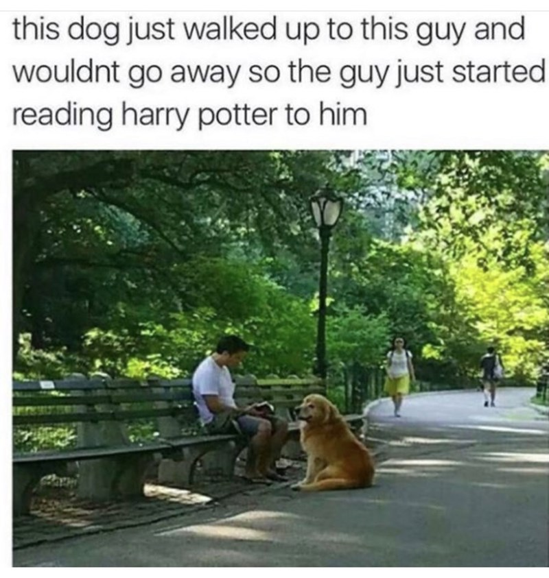 Tree - this dog just walked up to this guy and wouldnt go away so the guy just started reading harry potter to him