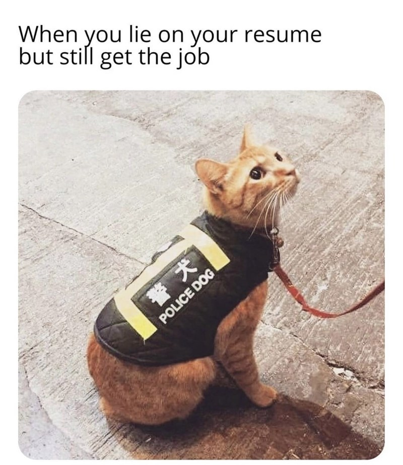Canidae - When you lie on your resume but still get the job POLICE DOG