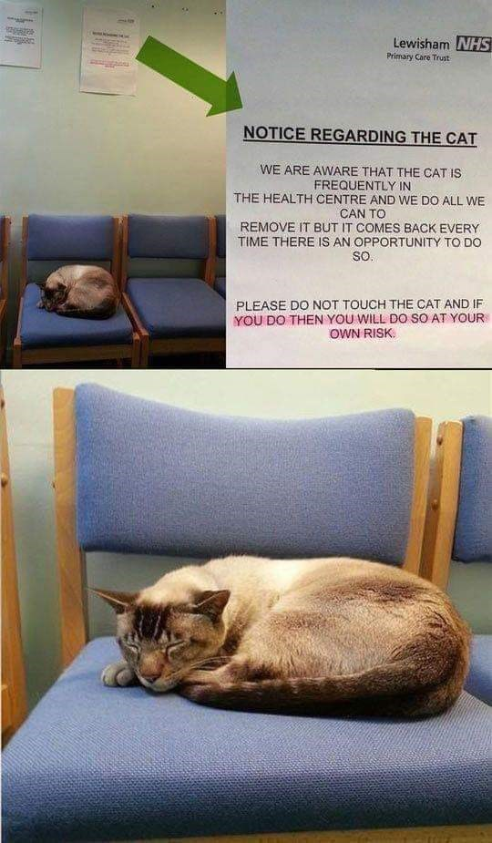 Cat - Lewisham NHS Primary Care Trust NOTICE REGARDING THE CAT WE ARE AWARE THAT THE CAT IS FREQUENTLY IN THE HEALTH CENTRE AND WE DO ALL WE CAN TO REMOVE IT BUT IT COMES BACK EVERY TIME THERE IS AN OPPORTUNITY TO DO so. PLEASE DO NOT TOUCH THE CAT AND IF YOU DO THEN YOU WILL DO SO AT YOUR OWN RISK.