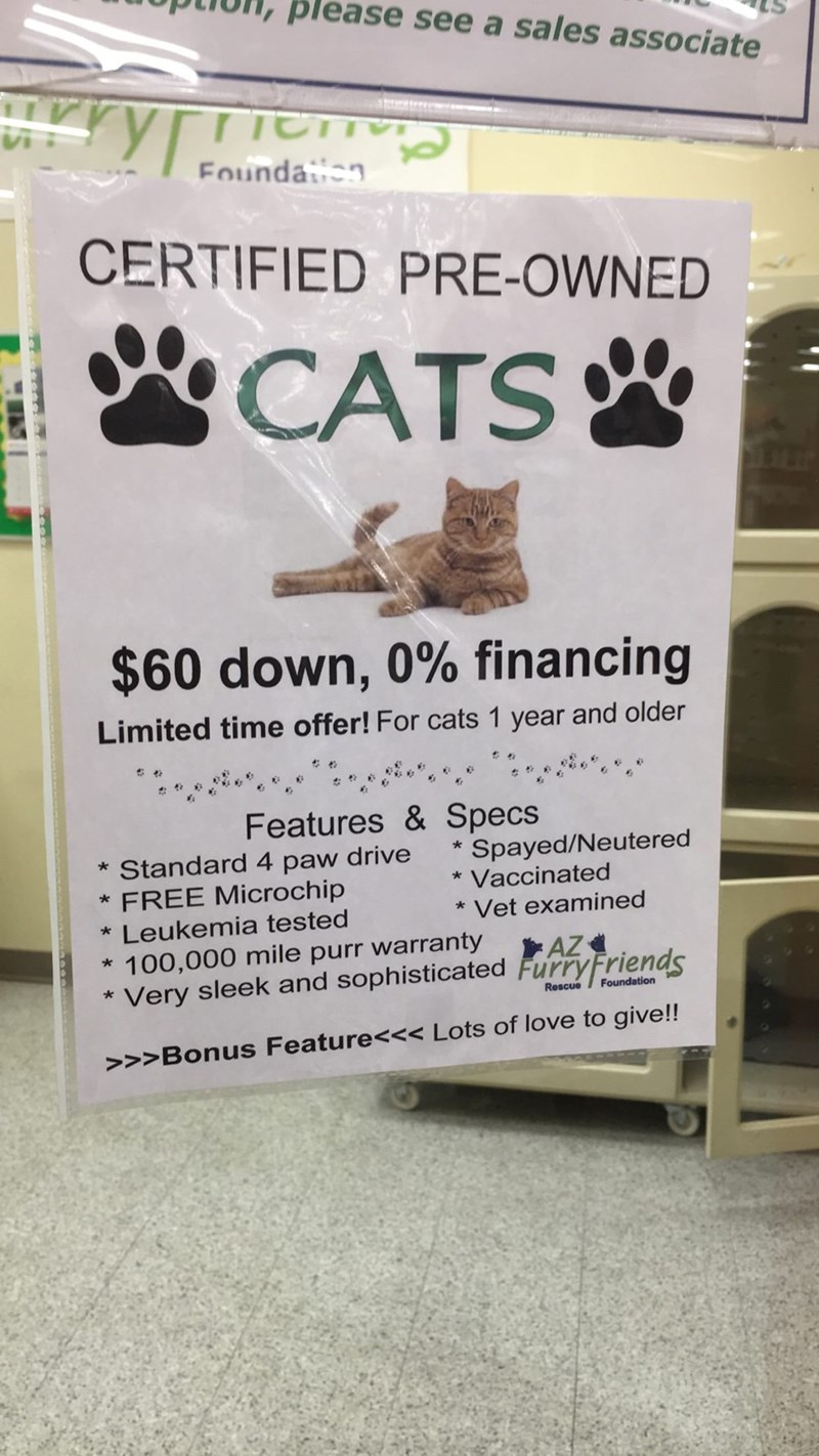 Advertising - please see a sales associate urryr TE Foundan CERTIFIED PRE-OWNED CATS $60 down, 0% financing Limited time offer! For cats 1 year and older Features & Specs Spayed/Neutered * Vaccinated * Standard 4 paw drive * FREE Microchip * Vet examined * Leukemia tested * 100,000 mile purr warranty Very sleek and sophisticated FurryFriends AZ Foundation Rescue >>>Bonus Feature<<< Lots of love to give!!