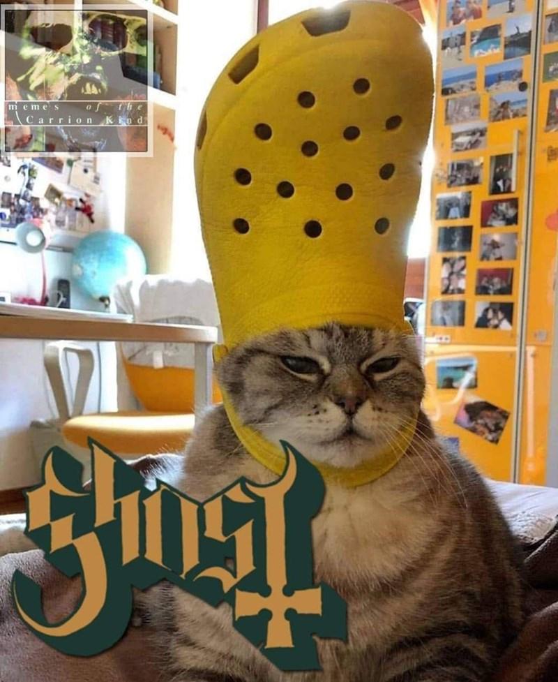 Cat - meme S CarrionKind