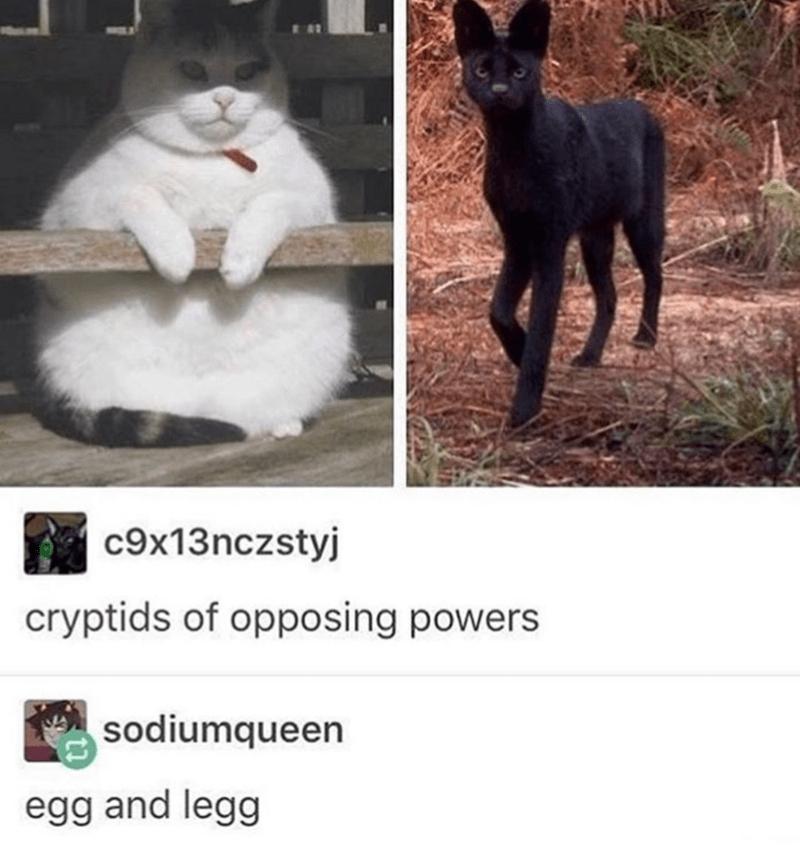 Cat - c9x13nczstyj cryptids of opposing powers sodiumqueen egg and legg