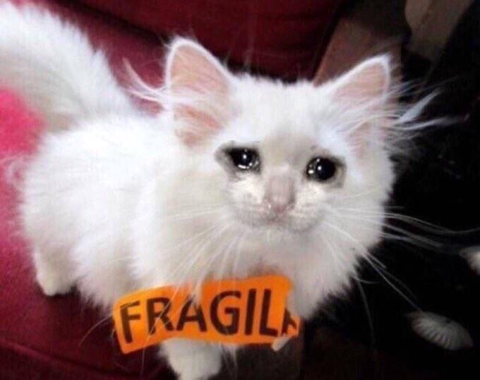 Cat - FRAGIL