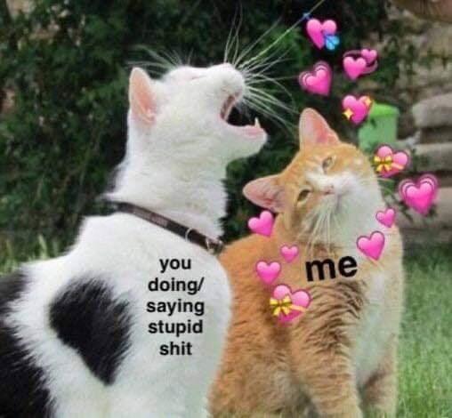 Cat - you doing/ saying stupid shit me
