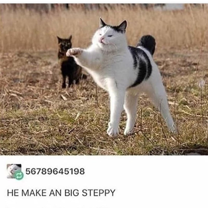 Cat - 56789645198 HE MAKE AN BIG STEPPY