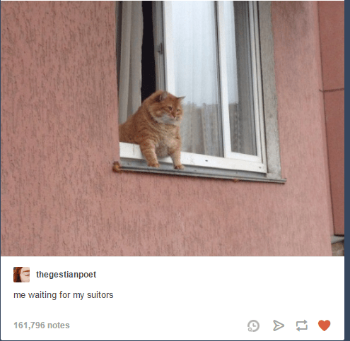 Cat - thegestianpoet me waiting for my suitors 161,796 notes