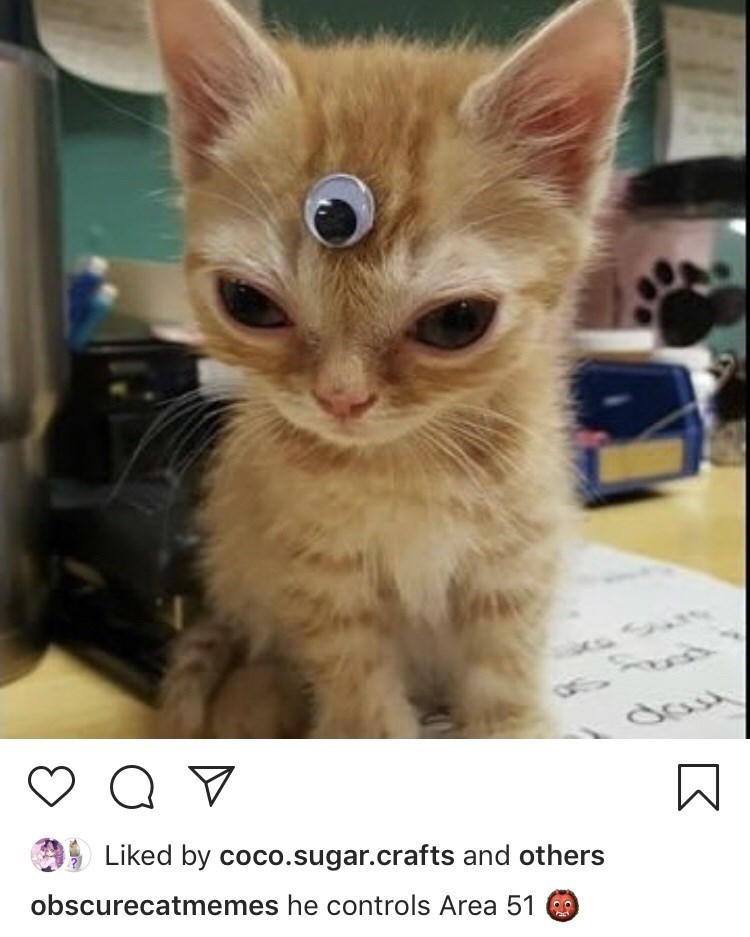 Cat - Liked by coco.sugar.crafts and others obscurecatmemes he controls Area 51 O