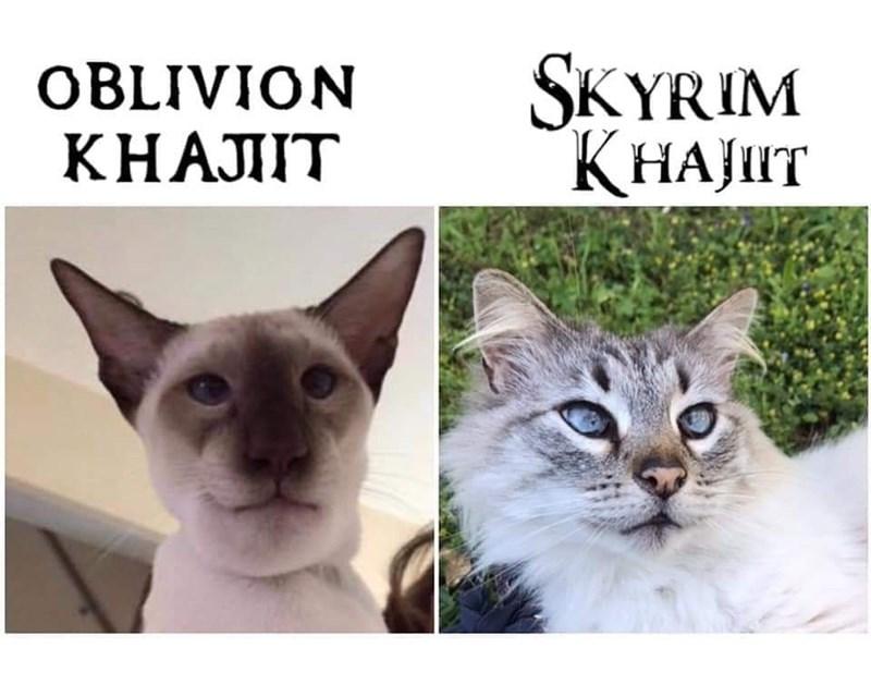 Cat - SKYRIM ҚНАЈТ OBLIVION КНАЛIТ
