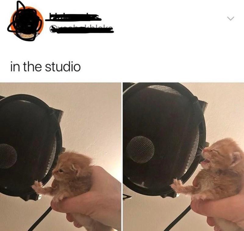 Helmet - telek in the studio