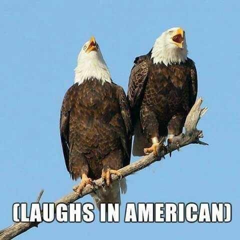 Bird - (LAUGHS IN AMERICAN)
