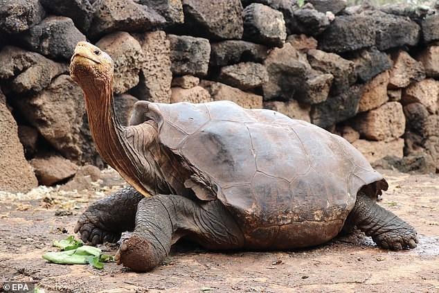 Tortoise - © EPA