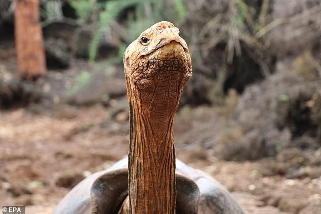 Reptile - © EPA