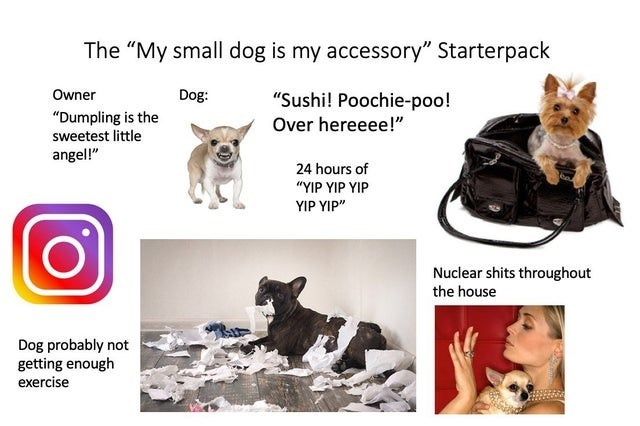 "Canidae - The ""My small dog is my accessory"" Starterpack Owner Dog: ""Sushi! Poochie-poo! ""Dumpling is the sweetest little Over hereeee!"" angel!"" 24 hours of ""YIP YIP YIP YIP YIP"" Nuclear shits throughout the house Dog probably not getting enough exercise"