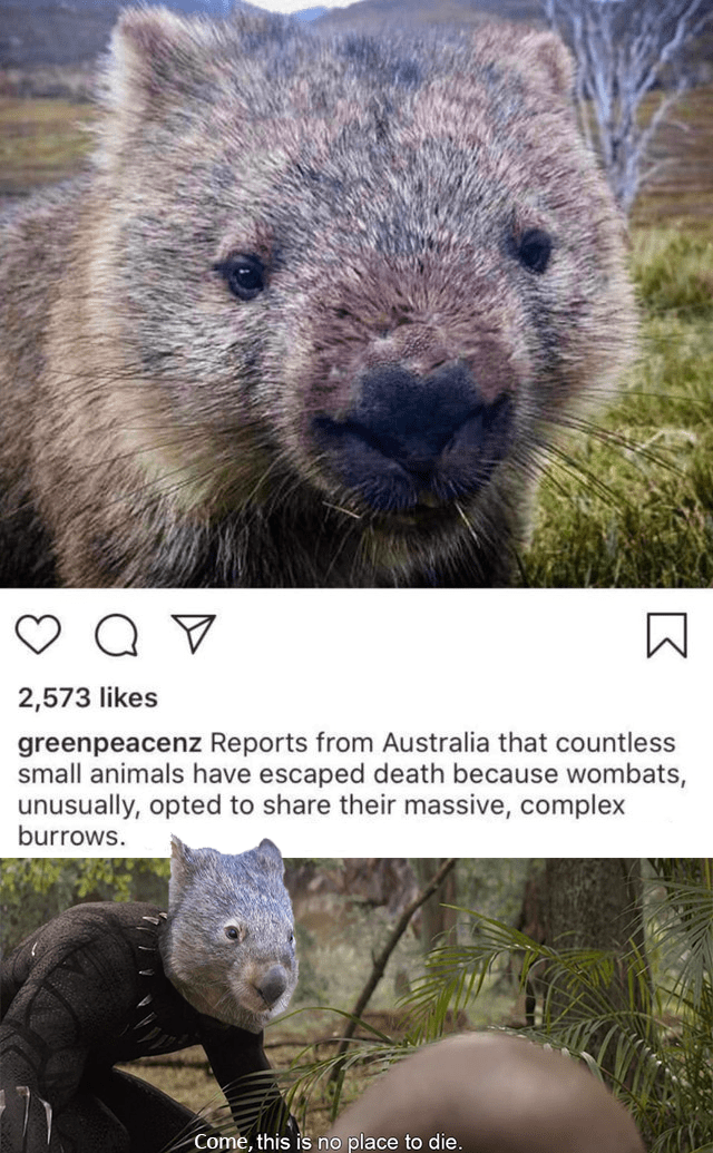 Mammal - 2,573 likes greenpeacenz Reports from Australia that countless small animals have escaped death because wombats, unusually, opted to share their massive, complex burrows. Come, this is no place to die.