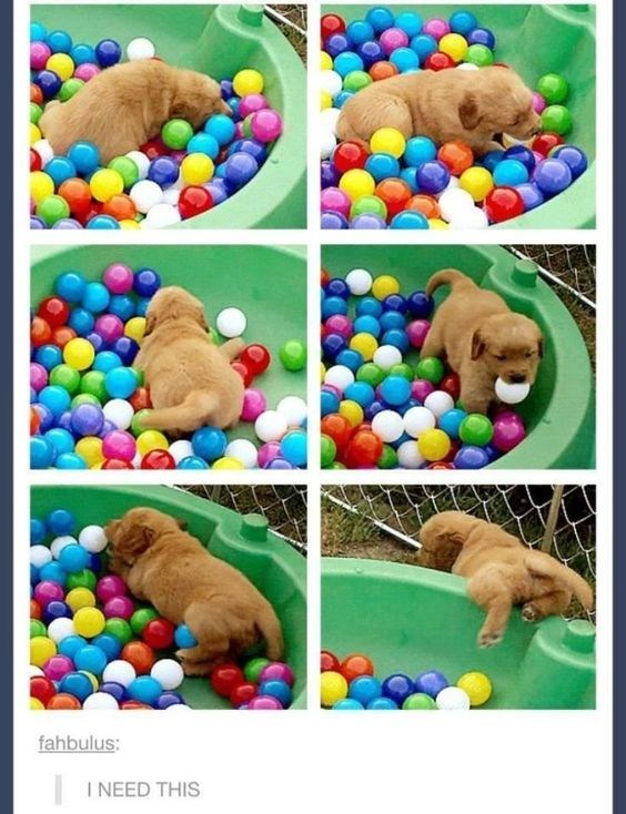 Ball pit - fahbulus: I NEED THIS