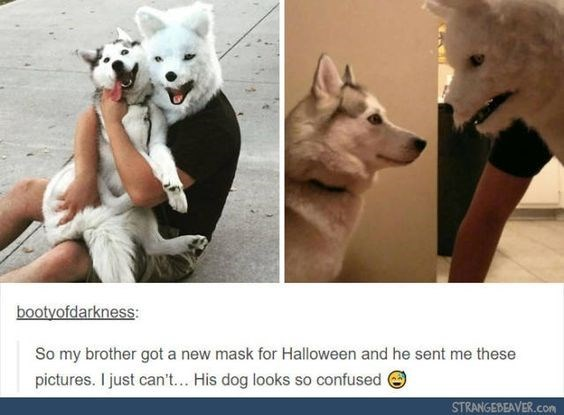 Canidae - bootyofdarkness: So my brother got a new mask for Halloween and he sent me these pictures. I just can't... His dog looks so confused STRANGEBEAVER.con