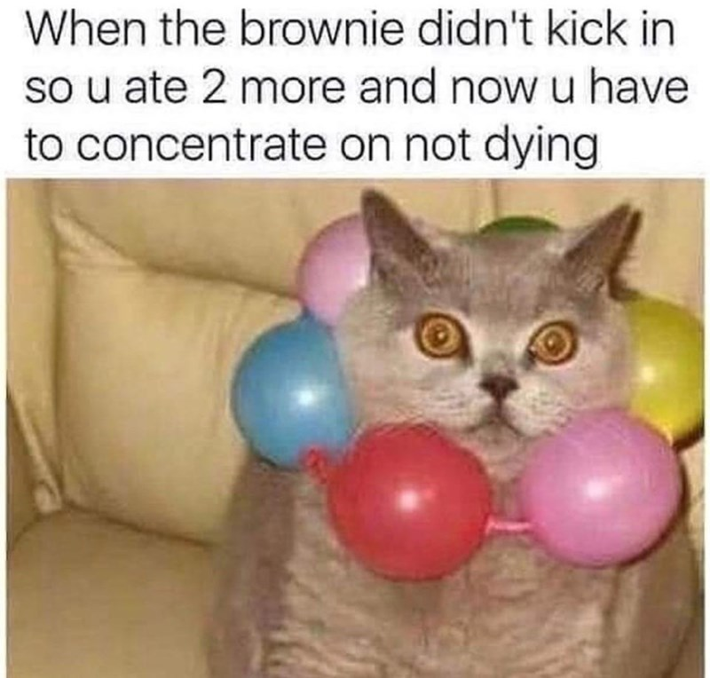 Cat - When the brownie didn't kick in so u ate 2 more and now u have to concentrate on not dying