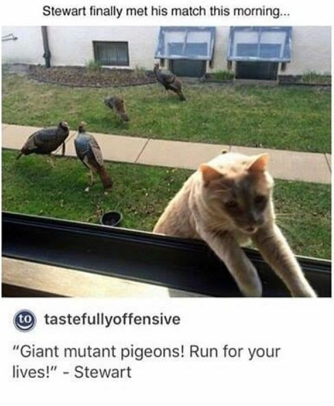 """Photo caption - Stewart finally met his match this morning... tastefullyoffensive """"Giant mutant pigeons! Run for your lives!"""" - Stewart"""