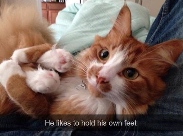 Cat - He likes to hold his own feet