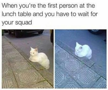 Cat - When you're the first person at the lunch table and you have to wait for your squad