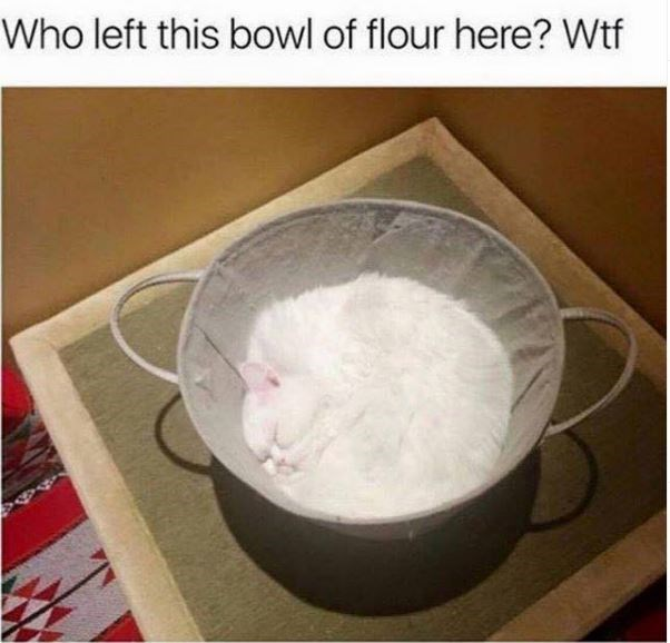 Cat - Who left this bowl of flour here? Wtf