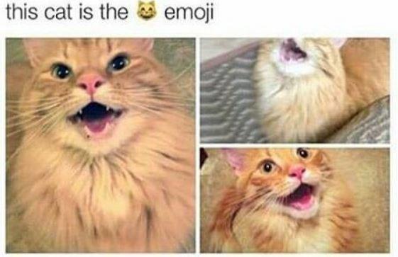 Cat - this cat is the emoji