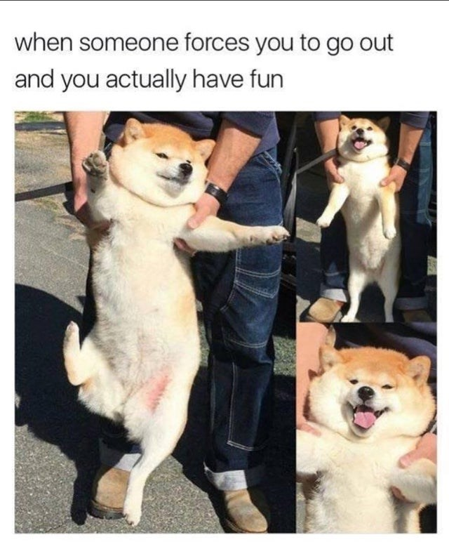 Dog breed - when someone forces you to go out and you actually have fun