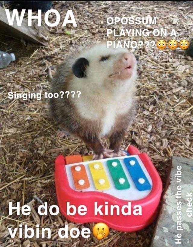 Marsupial - WHOA OPOSSUM PLAYING ON A PIANO?22 Singing too???? He do be kinda vibin doe He passes the vibe check