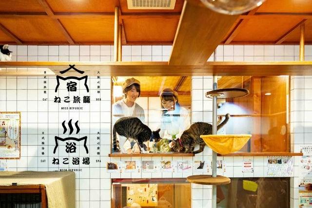"Cat - ねこ旅議 EAT MECO REPIREIE Aねこ浴場"" NECO AEPIRIIC"
