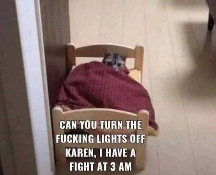 cat memes - 9422613760