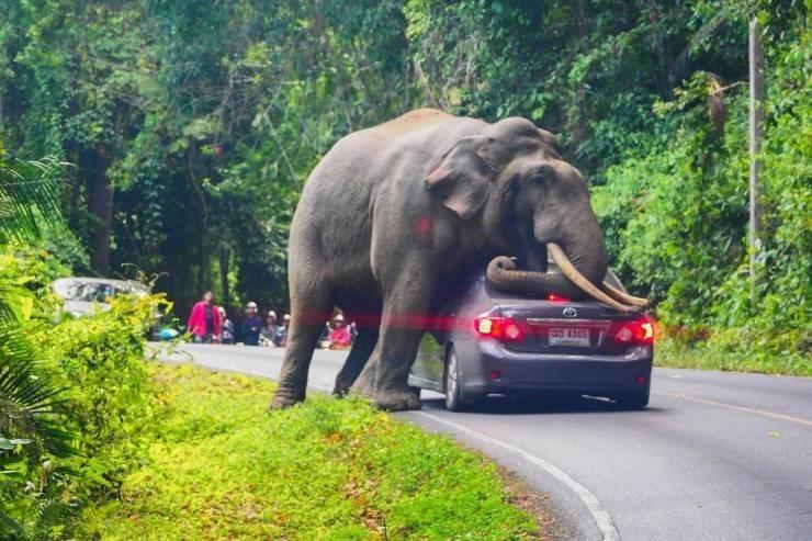 Elephant - 5 4365