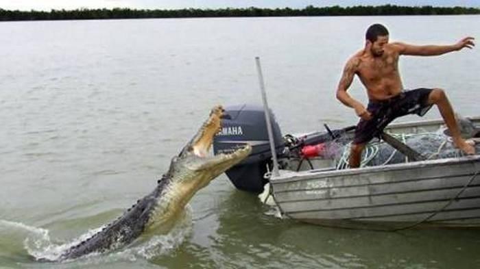 Crocodile - AMAHA
