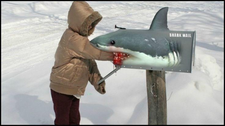 Fish - SHARK MAIL