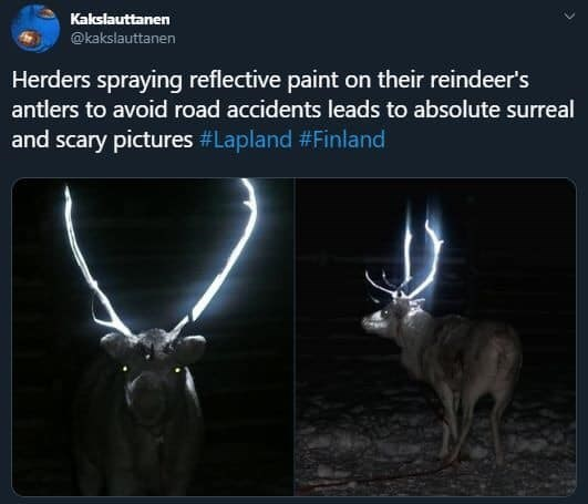 Reindeer - Kakslauttanen @kakslauttanen Herders spraying reflective paint on their reindeer's antlers to avoid road accidents leads to absolute surreal and scary pictures #Lapland #Finland