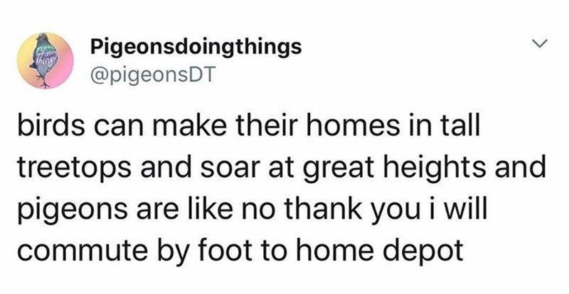 Text - Pigeonsdoingthings @pigeonsDT Thing birds can make their homes in tall treetops and soar at great heights and pigeons are like no thank you i will commute by foot to home depot