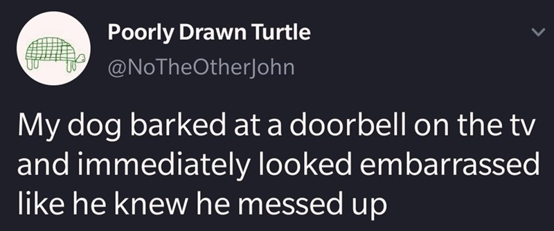 Text - Poorly Drawn Turtle @NoTheOtherJohn My dog barked at a doorbell on the tv and immediately looked embarrassed like he knew he messed up