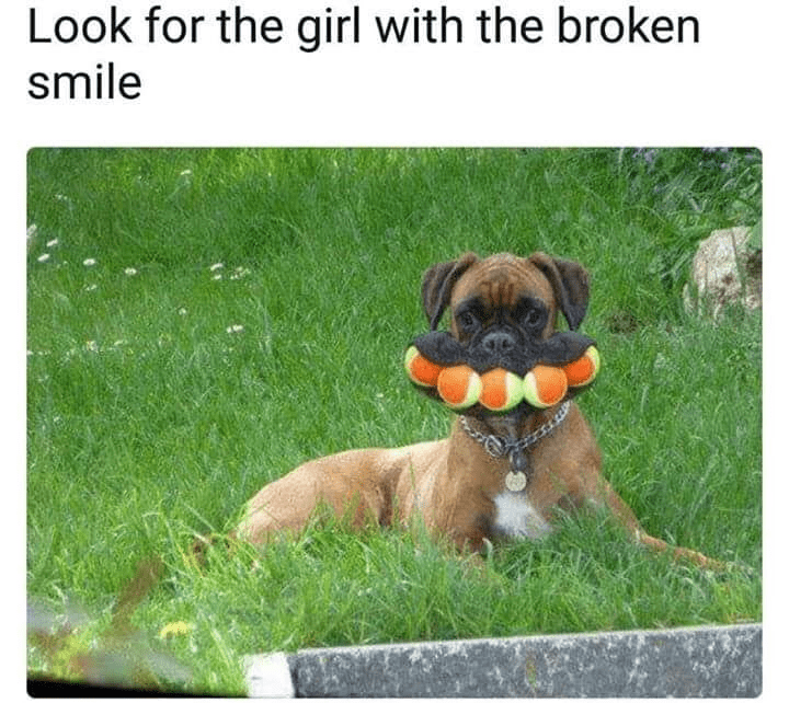 Dog - Look for the girl with the broken smile