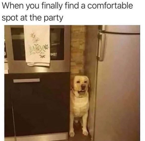Dog - When you finally find a comfortable spot at the party