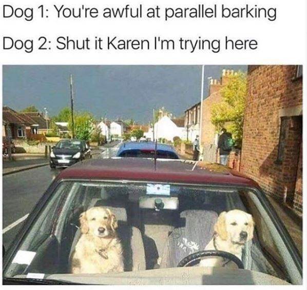 Vehicle - Dog 1: You're awful at parallel barking Dog 2: Shut it Karen I'm trying here