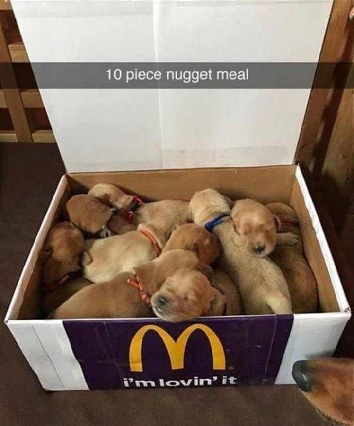 Dog - 10 piece nugget meal i'm lovin' it