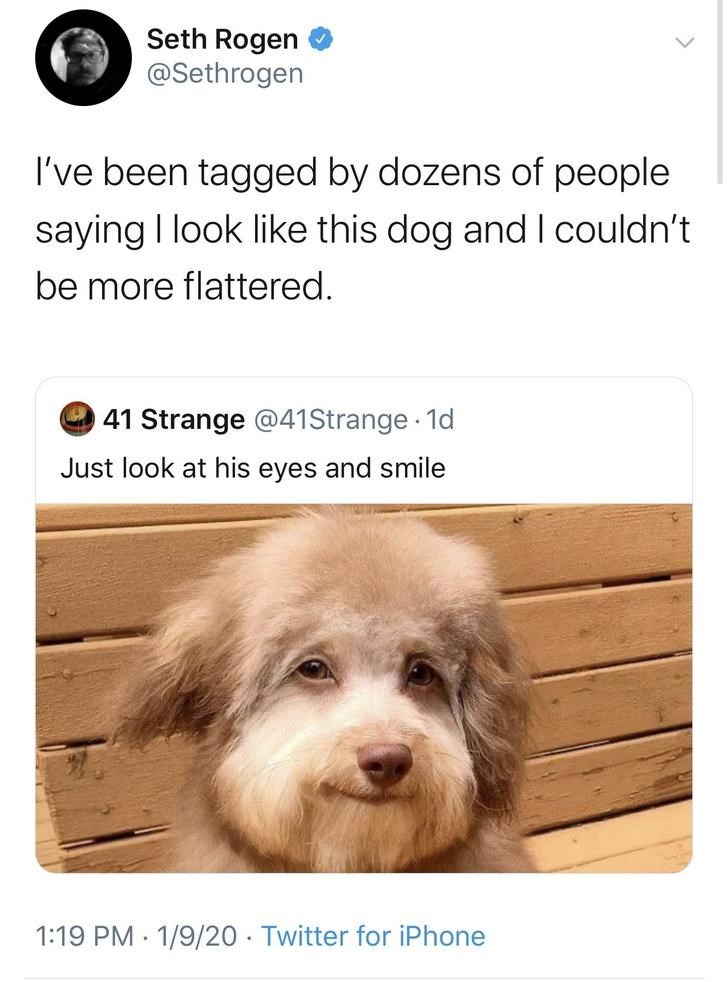 Dog - Seth Rogen @Sethrogen I've been tagged by dozens of people saying I look like this dog and I couldn't be more flattered. 41 Strange @41Strange 1d Just look at his eyes and smile 1:19 PM · 1/9/20 · Twitter for iPhone